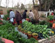 Doonholms Healthy Living Herbs Range of Herbs - Healthy Living Herbs Show Garden at Garden World Spring Festival
